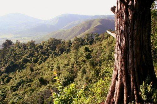 Kijabe hillside